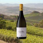 Grillo cavallo delle fate - vini viaggio in sicilia
