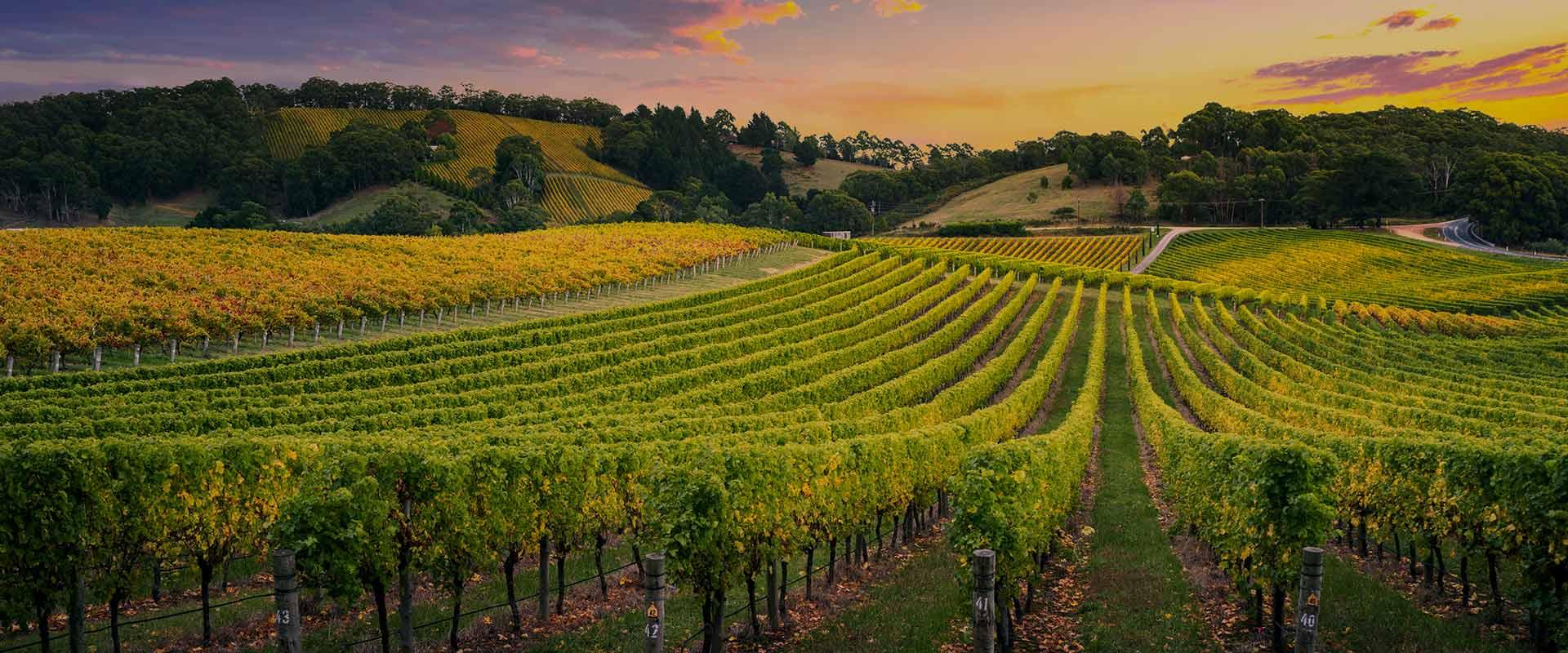 Vini siciliani, viaggio in sicilia